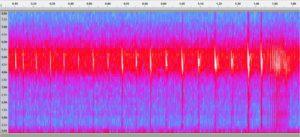 Sonogramme d'une chauve-souris en division de fréquence