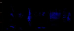 Merle séquence 4